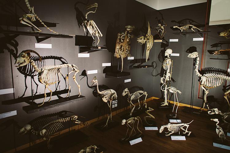 Exposition parce Queue – Muséum Aquarium de Nancy :: commande portraits